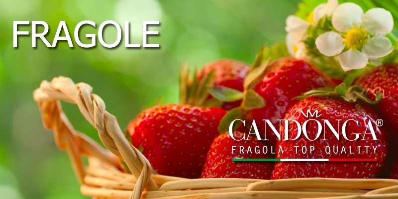 b_fragole